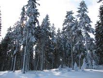 Winterschnee bedeckte Bäume im Wald stockbild