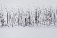 Winterschnee, der auf Blockhaus in staatlichem Wald Sans Isabellfarbe fällt lizenzfreie stockfotografie