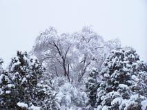 Winterschnee, der unten Bäume in Santa Fe wiegt lizenzfreies stockfoto