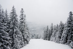 Winterschnee-Gebirgslandschaft in Bulgarien Lizenzfreie Stockbilder