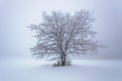 Winterschnee-Waldschnee liegt auf den Niederlassungen von Bäumen Eisiges und nebeliges Schneewetter Schöne Winterwaldlandschaft lizenzfreies stockbild