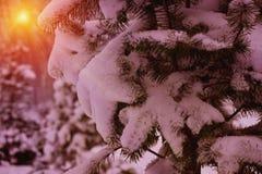 Winterschneebäume mit heller gelber Sonne mit langen sonnigen Strahlen Stockfoto