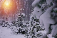 Winterschneebäume mit heller gelber Sonne mit langen sonnigen Strahlen Stockbild