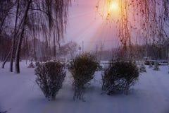 Winterschneebäume mit heller gelber Sonne mit langen sonnigen Strahlen Stockfotos