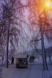 Winterschneebäume mit heller gelber Sonne mit langen sonnigen Strahlen Stockfotografie