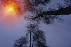 Winterschneebäume mit heller gelber Sonne mit langen sonnigen Strahlen Stockbilder