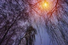 Winterschneebäume mit heller gelber Sonne mit langen sonnigen Strahlen Lizenzfreie Stockbilder