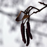 Winterschneeetüde Stockfotografie