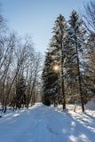 Winterschneelandschaft mit Wald und Sonne stockfoto