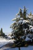 Winterschneeszene Stockfoto