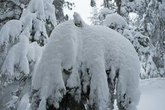 Winterschneeszene mit Schnee bedeckte Bäume auf Berg Seymour stockfotos