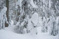 Winterschneeszene mit Schnee bedeckte Bäume auf Berg Seymour lizenzfreies stockbild
