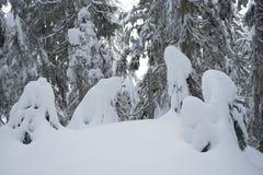 Winterschneeszene mit Schnee bedeckte Bäume auf Berg Seymour lizenzfreies stockfoto