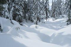 Winterschneeszene mit Schnee bedeckte Bäume auf Berg Seymour-` s Hundebergwanderung stockbild