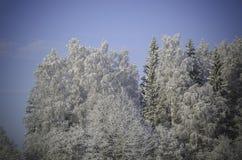 Winterschneewehen, russischer Winter Lizenzfreies Stockfoto