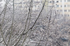 Winterschneewetter auf Wald mit Baumast im Licht der Straßenlaterne Stockfoto