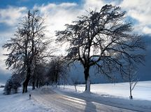 Winterse mening van boom gevoerde weg Royalty-vrije Stock Afbeelding