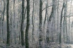 Winterse scène: Rijp in het bos Stock Afbeeldingen