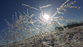 Winterse zon Stock Foto