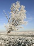Winterslandschap, de Winterlandschap royalty-vrije stock foto