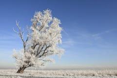 Winterslandschap, de Winterlandschap stock afbeeldingen