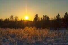 Wintersonne über dem Wald Lizenzfreies Stockfoto