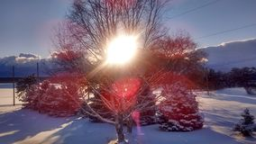 Wintersonne, die durch Bäume bricht Stockfoto