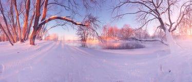 Wintersonnenaufgang im Wald lizenzfreie stockbilder