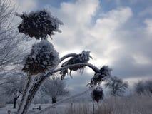 Wintersonnenblumen Stockbild