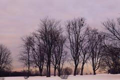 Wintersonnenuntergang im botanischen Garten stockbild