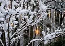 Wintersonnenuntergang im Schneewald Lizenzfreie Stockfotografie