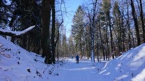 Wintersporten in de winterbos Stock Afbeeldingen