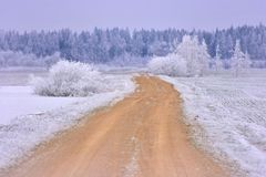 Winterstraße in den Wald lizenzfreie stockbilder