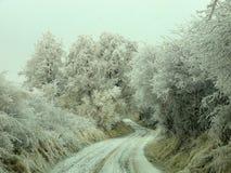Winterstraße, die unter eisigen Bäumen wandert Lizenzfreies Stockbild