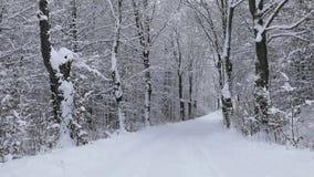 Winterstraße durch den Wald stock footage