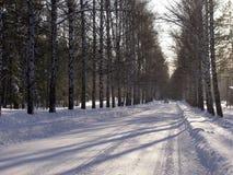 Winterstraße durch den Wald Lizenzfreies Stockbild