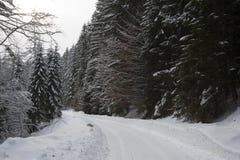 Winterstraße in einem Wald lizenzfreie stockfotos