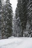 Winterstraße in einem Wald Lizenzfreies Stockbild