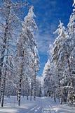 Winterstraße im Wald Stockfotos