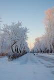 Winterstraße mit Bäumen Stockbild
