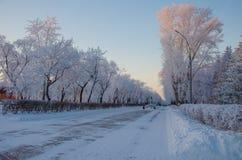 Winterstraße mit Bäumen Stockfotografie