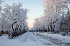 Winterstraße mit Bäumen Stockfotos