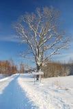 Winterstraße mit Zeichen und Baum Stockbild