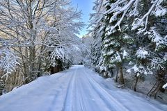 Winterstraße und -bäume bedeckt mit Schnee Stockbilder