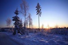 Winterstraße und -bäume im Sonnenuntergang Lizenzfreies Stockfoto