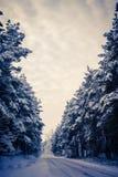 Winterstraße und der Wald stockfoto