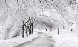 Winterstraße unter den Bäumen Stockbilder