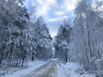 Winterstraße im Wald lizenzfreie stockfotos
