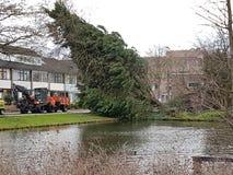 Wintersturm beschädigte zwei Bäume in der Stadt von nieuwerkerk aan Höhle IJssel in den Niederlanden Lizenzfreie Stockfotos