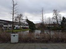 Wintersturm beschädigte zwei Bäume in der Stadt von nieuwerkerk aan Höhle IJssel in den Niederlanden Lizenzfreie Stockfotografie